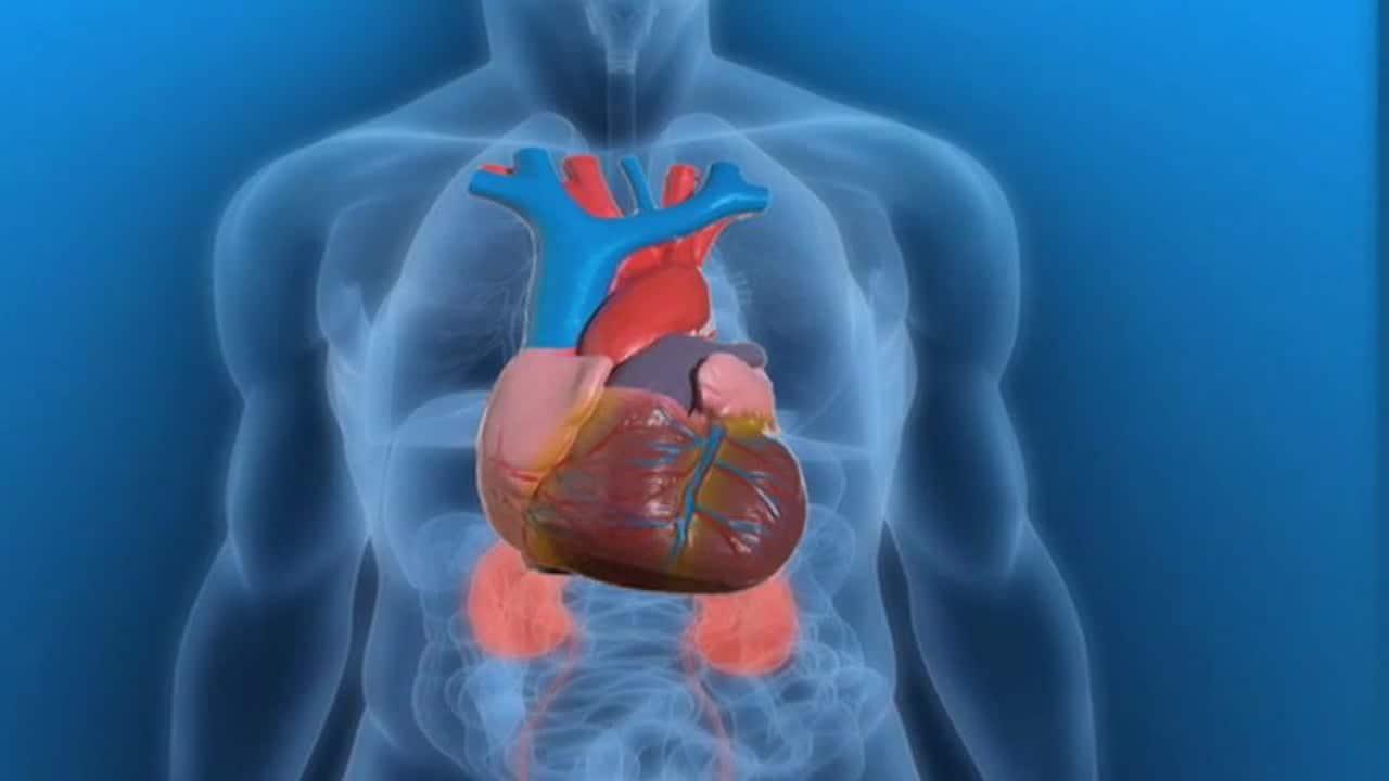 Onderzoekers gebruiken hart als verificatiemethode